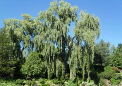 Toronto ~ Edwards Gardens ~ Willows